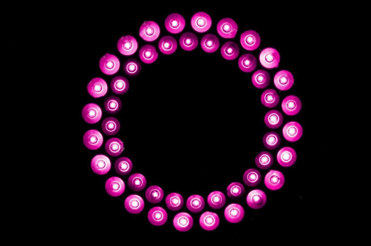 12520125-pinkki